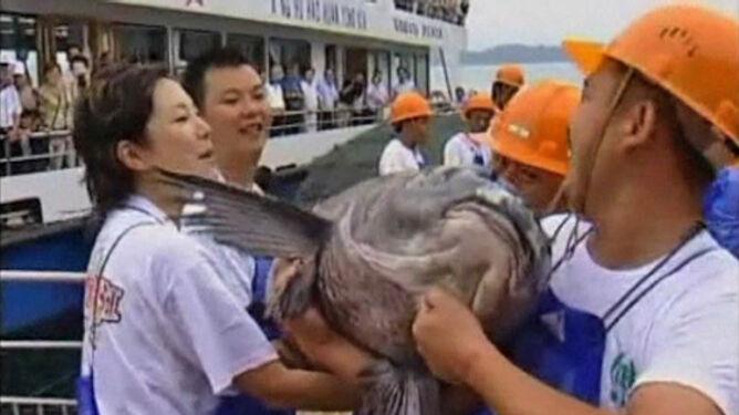 W majówkę oglądają bawoły i łowią gigantyczne ryby