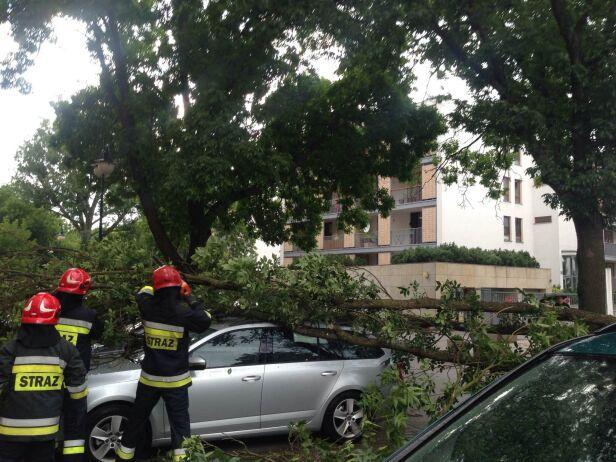Przewrócone drzewo na Bemowie  Daniel /Kontakt24