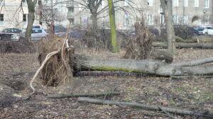 """Wycięte drzewa w parku na Solcu. """"Zagrażały bezpieczeństwu"""""""