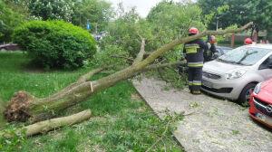 Drzewo spadło na pięć aut