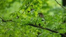 Gniazdo zostało założone w leśnictwie Murcki (Mirosław Wąsiński/Lasy Państwowe)